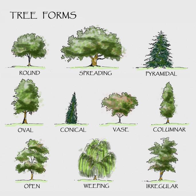 tree_forms_color copy_papyrus_rv.jpg